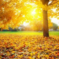 Новая Осенняя Песня