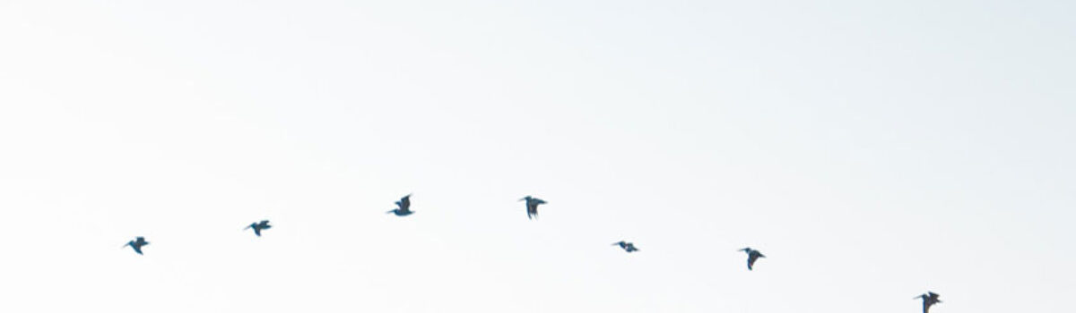 Видеоклип Птички