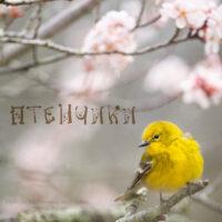 Песня Птенчики